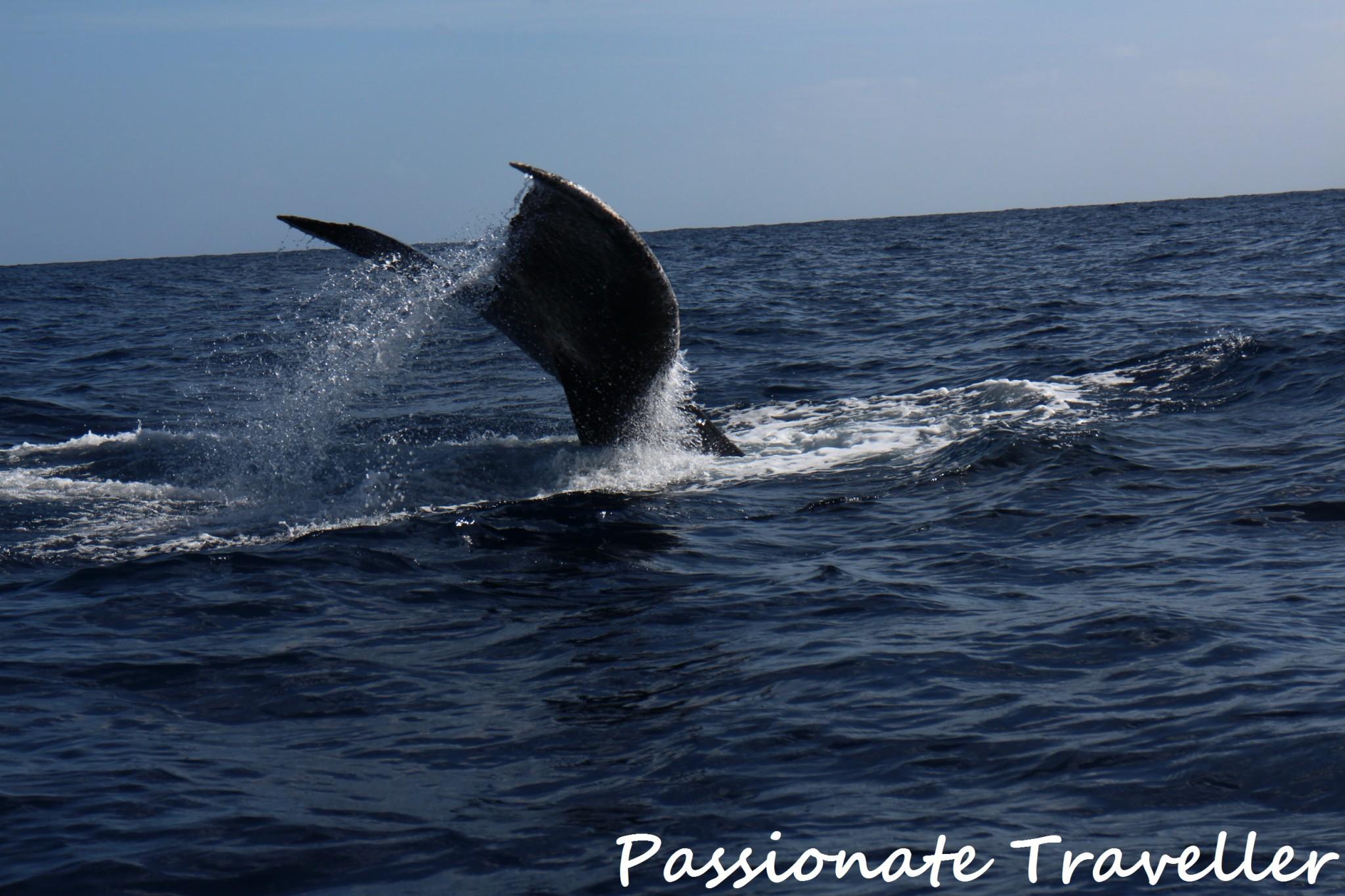 Cabo San Lucas Whales