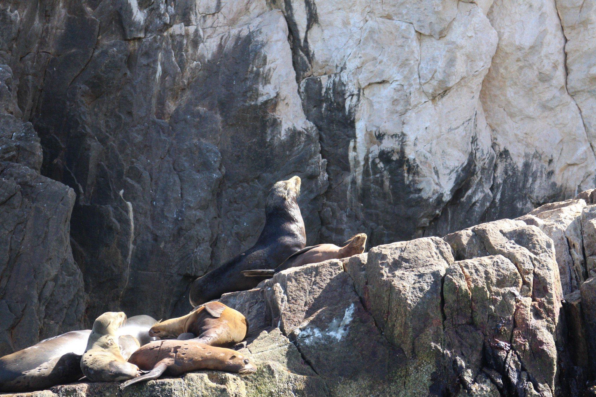 Sea Lions Mexico