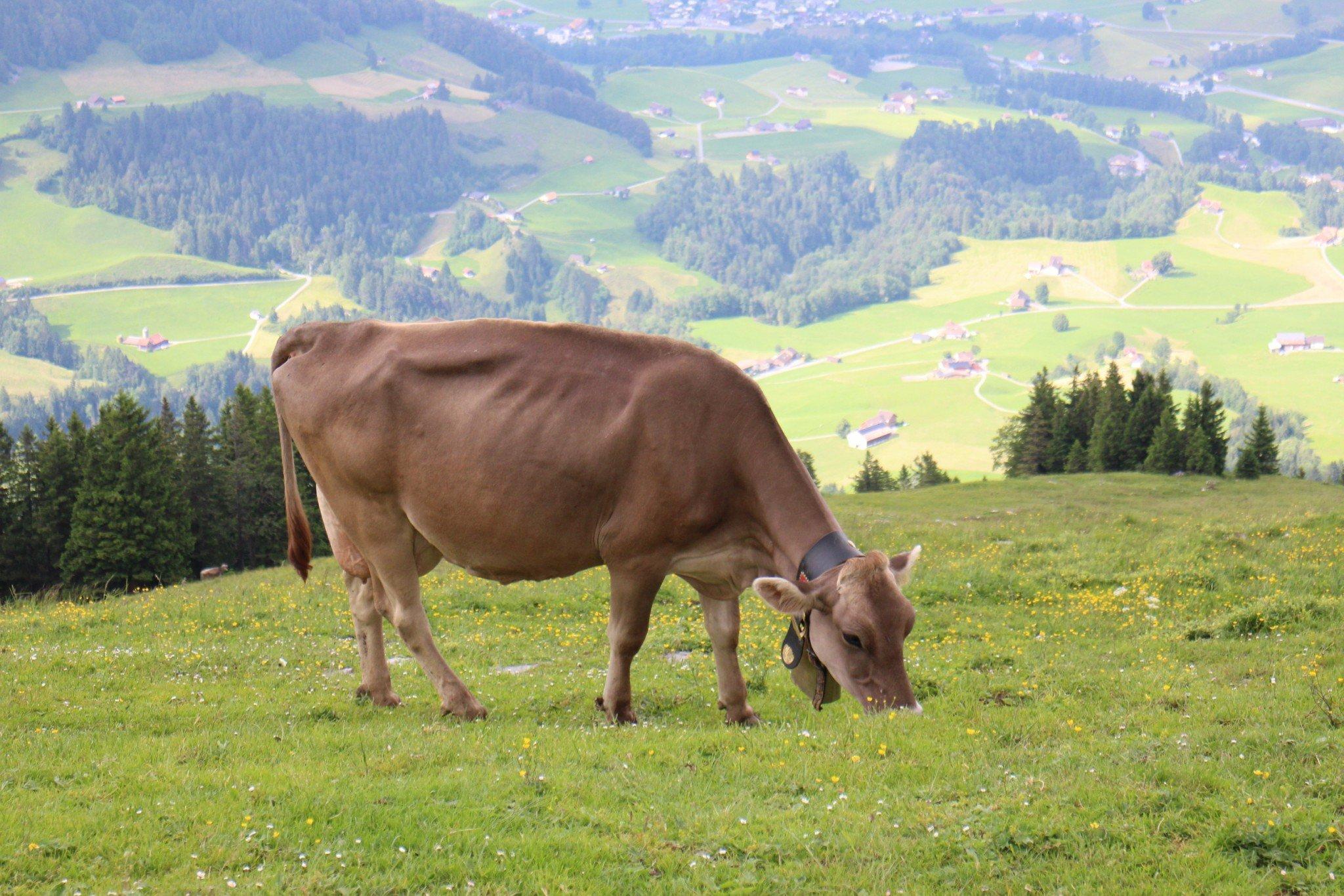 Berggasthaus Aescher-Wildkirchli hiking 1