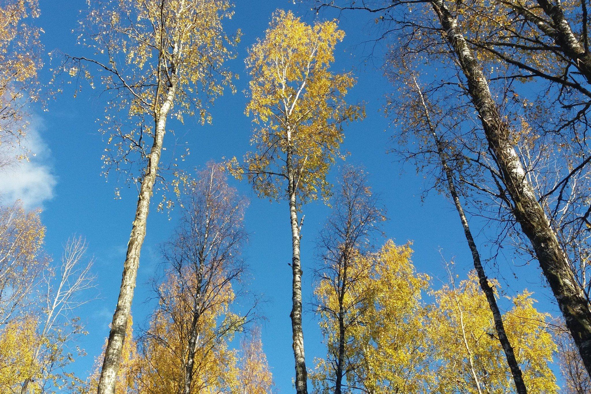 Finland Nature Autumn