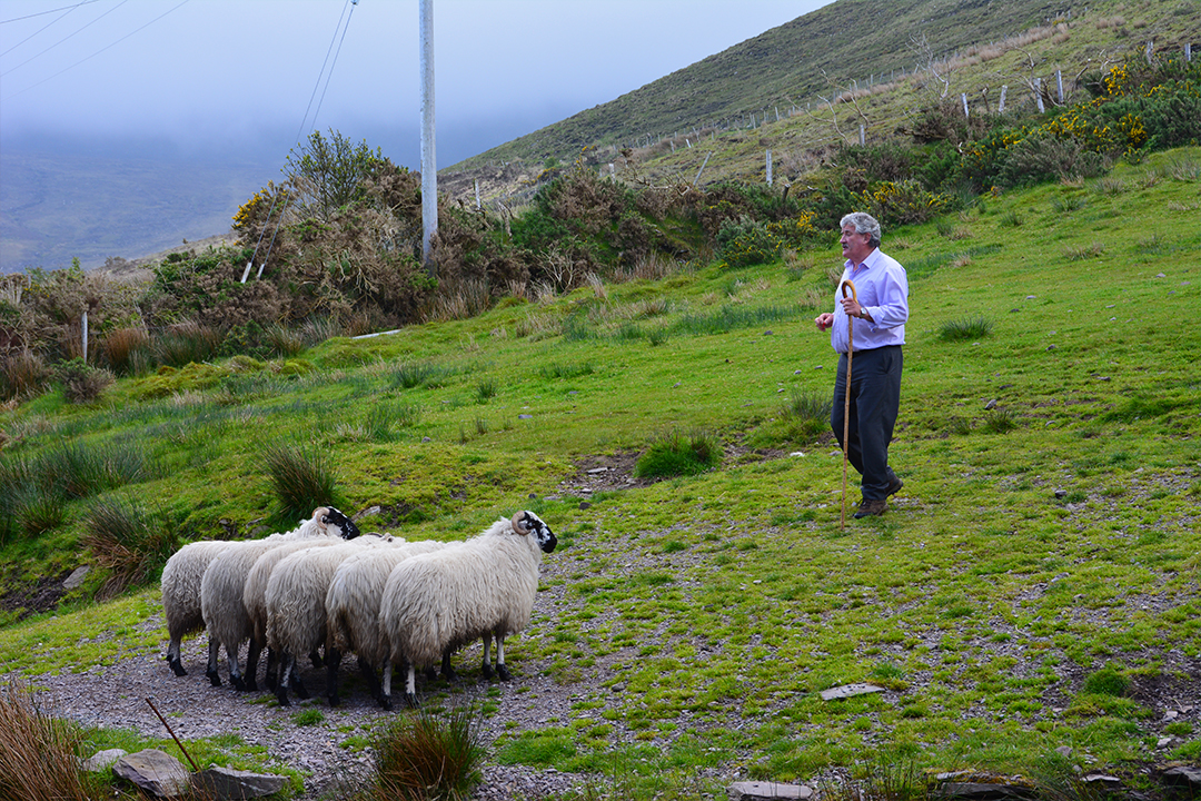 Kells Sheep Centre, Irlanti