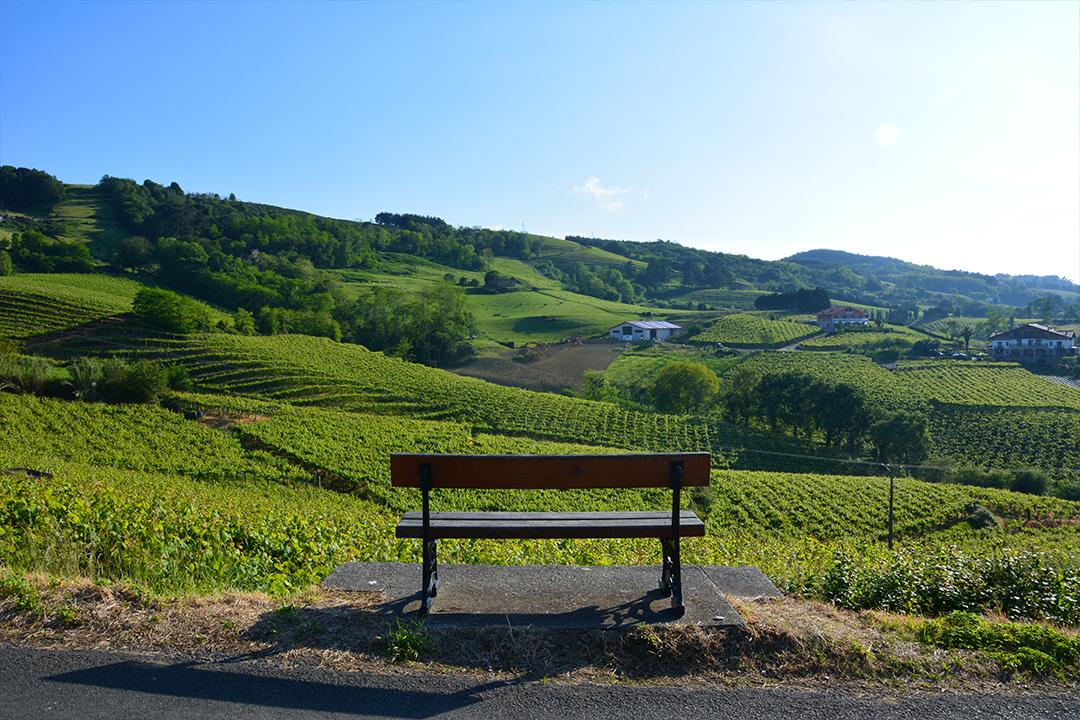Viiniviljelmiä Getariassa