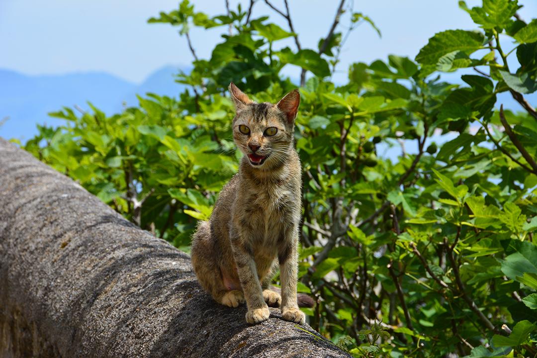 San Antonin kukkulan kissa