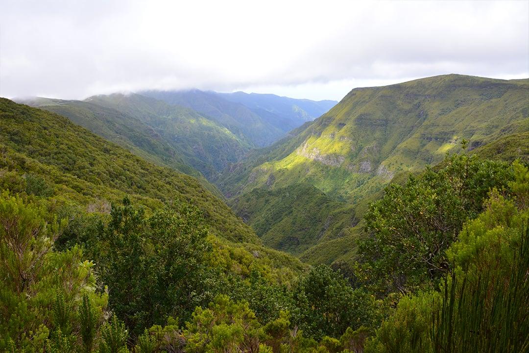 Madeiran luontoa