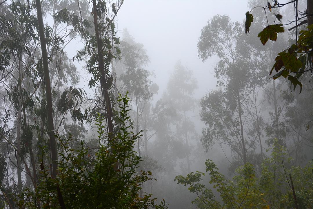 Metsää portelan lähistöllä