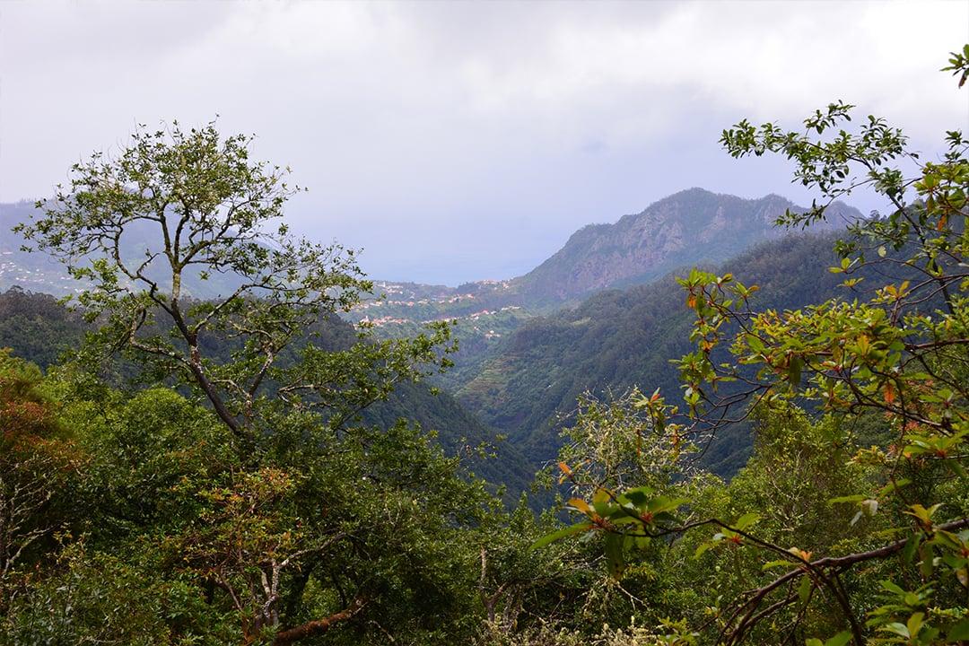 Madeiran pohjoisrannikkoa