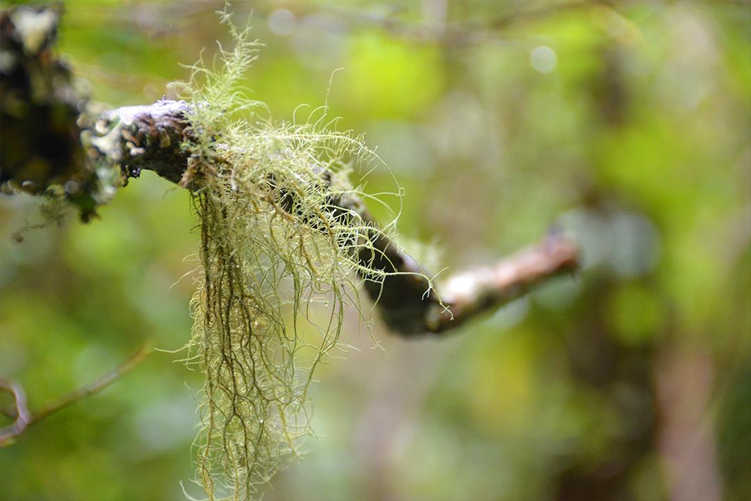 Metsän yksityiskohtia