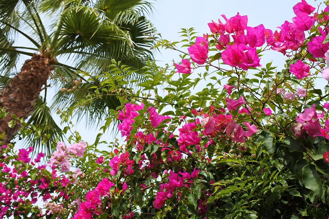 Kotipihan kukkia