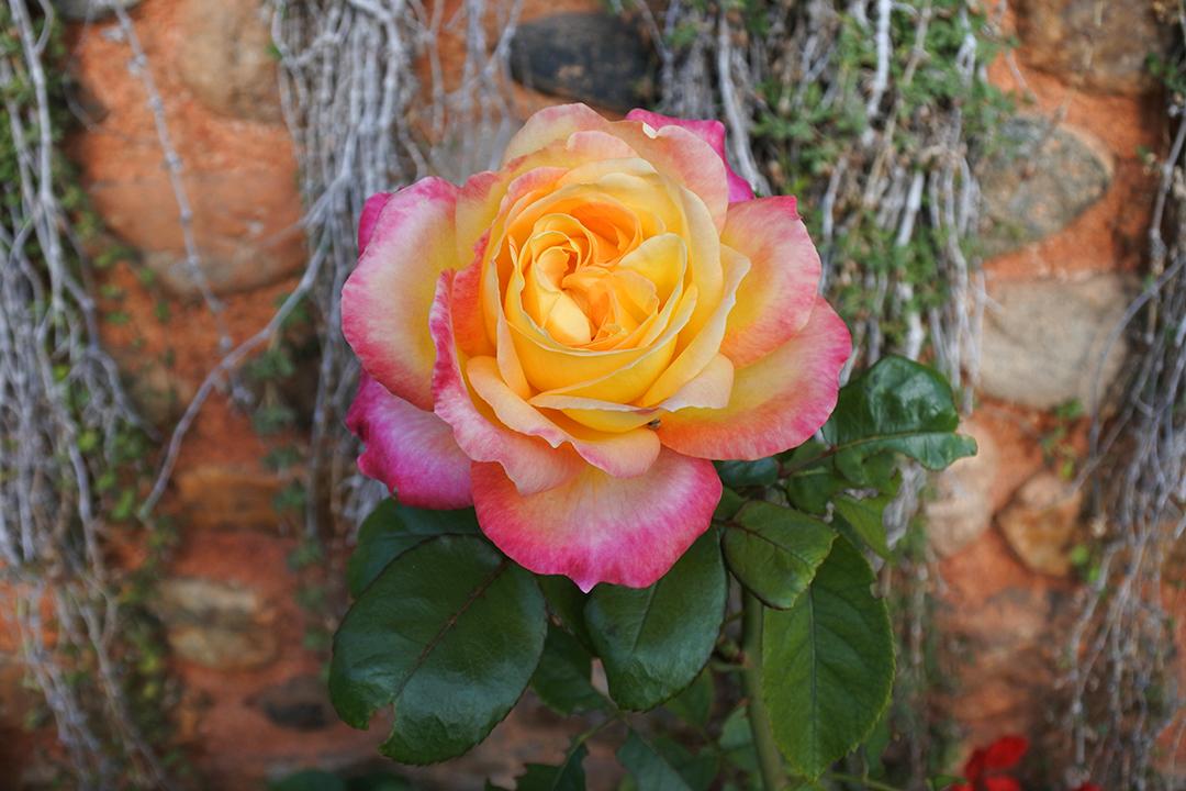 Generalifen puutarha, Alhambra