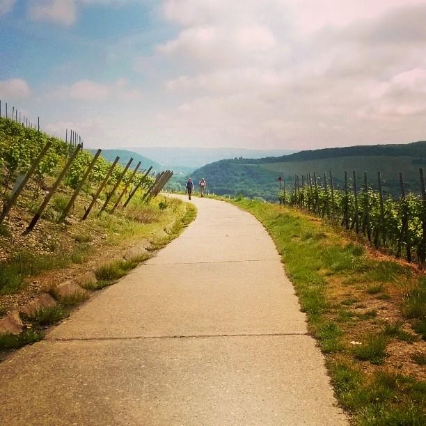 #Rotweinwanderweg Wandering in vineyards #thisisgermany #saksanviinit #vineyard #landscape #redwine #rotwein #matkablogi #lempipaikkojani #ahrtal #ahr #wander #wanderlust #reimsheim #lomallesaksaan #winetravel #germannature
