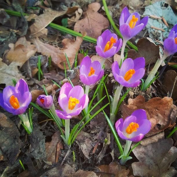 Happy valentines day! Hyvää ystävänpäivää kaikille teille ihanille ihmisille! Täällä Saksassa kevätaurinko paistaa ja blogistakin löytyy uutta luettavaa. Linkki blogiin löytyy profiilista #spring #germany #visitgermany #kevät #krookus #frühling #krokus #ourgermany #beautyofnature #springflowers