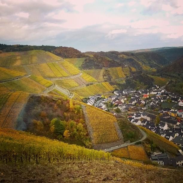 Saksan Ahr-joen viinialue on loistava kohde myös ruskamatkalle marraskuussa. Lue lisää blogista. Linkki profiilissa. #matkablogi #lempipaikkojani #viinimatkailu #saksanviinit #lomallesaksaan #ahr #ahrtal #dernau #visitahr #visitgermany #visitdernau #ourgermany #bestofgermany #germanwines #Weinberge #rotwein #ruska #november #winetravel #winetourism #vineyard