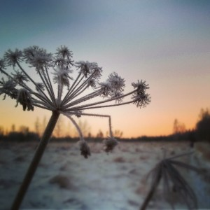 26 degrees winter in Finland is beautiful but cold! thisisfinlandhellip