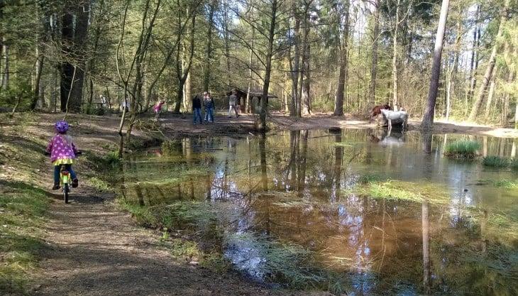 Olen onnellinen perheen yhteisestä ajasta. Olen onnellinne, että voimme mennä sunnuntaina metsälammelle ja nähdä siellä vaikka hevosia!