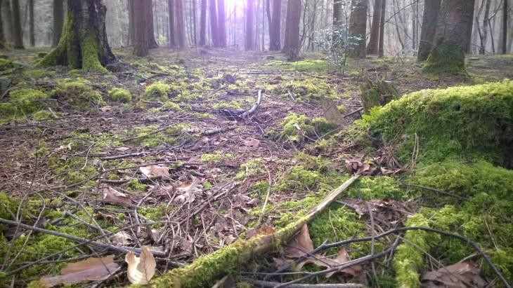 Aamulenkillä metsän rauhassa.
