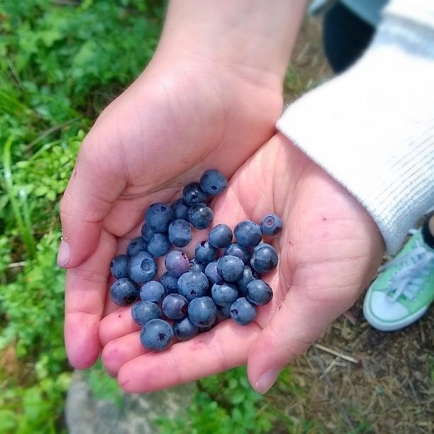 Lapset viihtyvät metsässä, kun saa syödä parasta herkkua suoraan #Blueberries #Blaubeere #mustikoita #thisisfinland #finnishsummer #finnishnature #fromnature #naturelovers #forest #forestberries #Natur #Wald #heidelbeere #vitamins #suomiretki #parastasuomessa #metsä