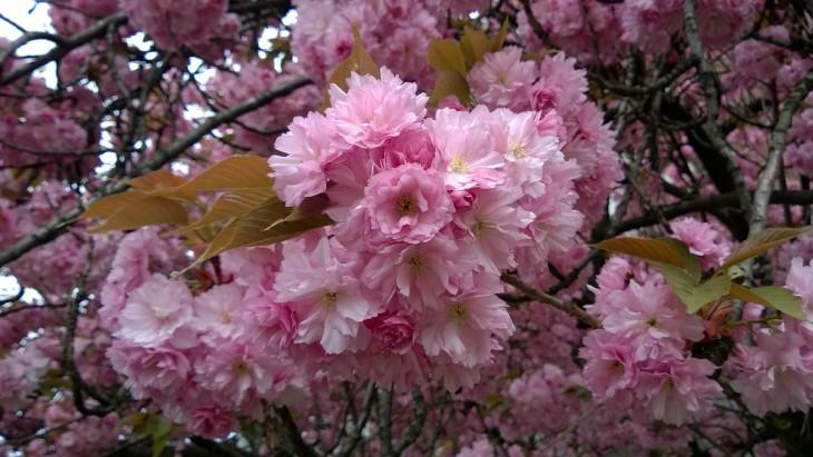 kukkapuu2