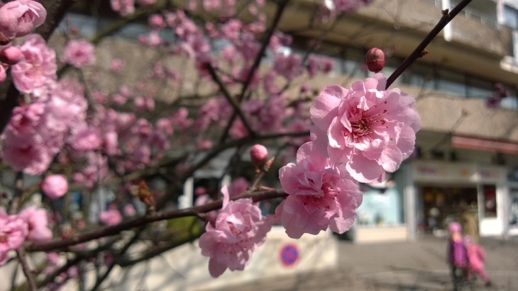 kukkapuu3