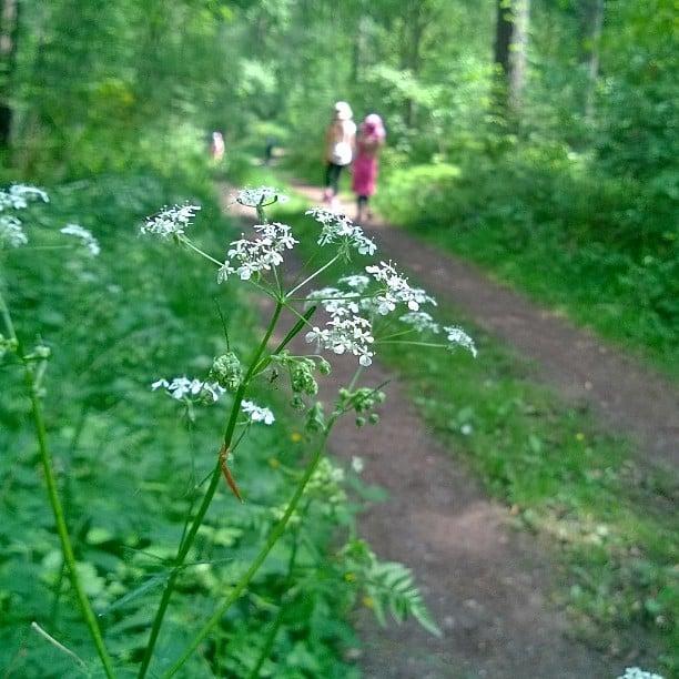 Wandern im Wald, im Kall, Eifel. #kall #eifel #Natur #nature #Wald #imwald #forest #wandering #Wanderung #Wanderweg #germannature #naturelovers #voimaaluonnosta #metsä #lomallesaksaan #matkablogi #luontoretki