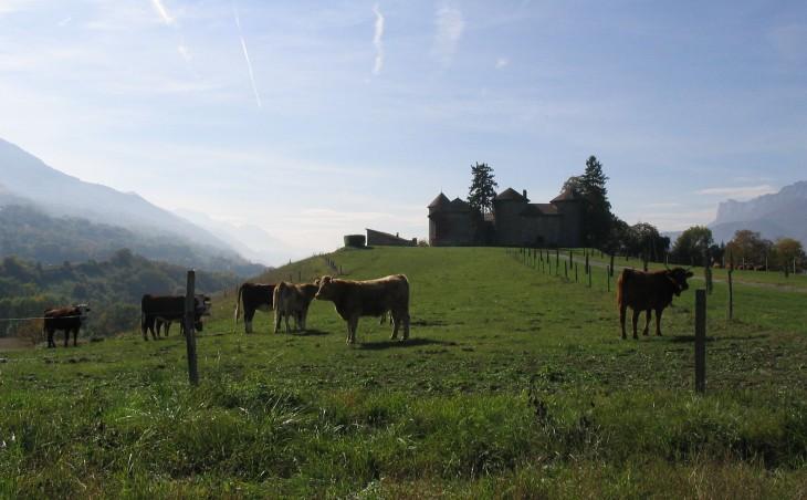 linnan lehmät Ranska