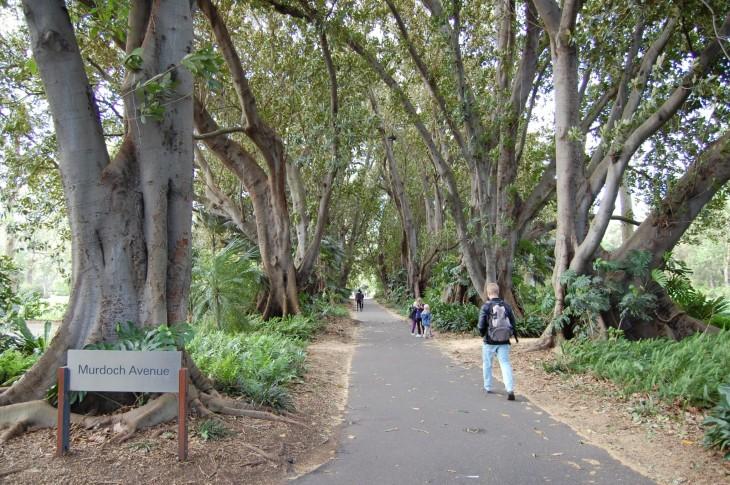 adelaide_botanic_gardens