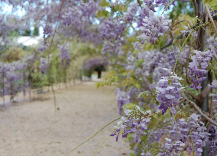 adelaide_botanic_gardens_lokakuu