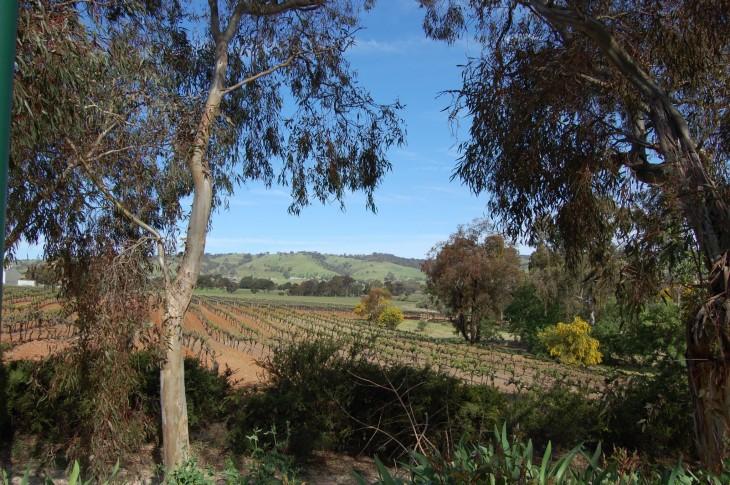 barossa_valley_viinialue