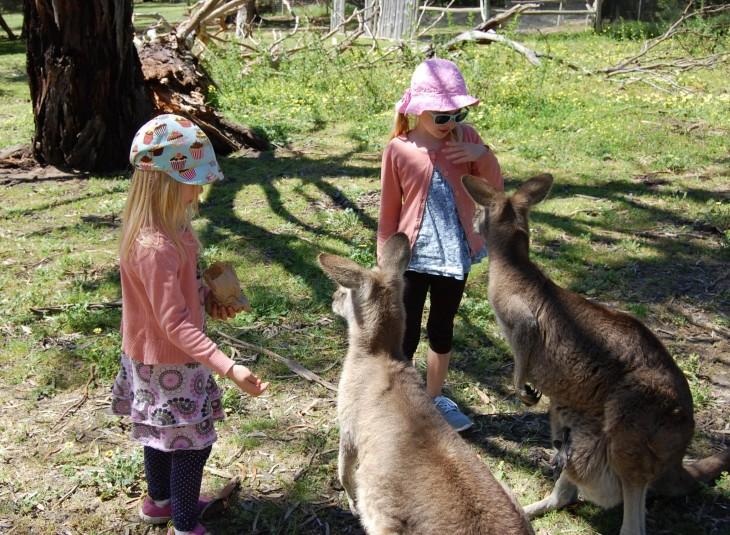 kenguruita_syöttämässä_urimbirra_wildlifepark