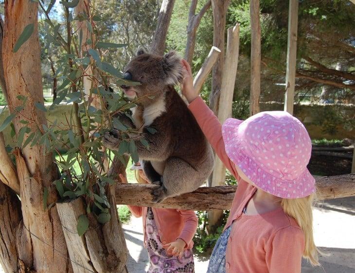 koalaa silittämässä Urimbirrassa
