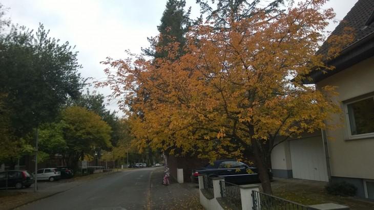 mantelipuu_lokakuu