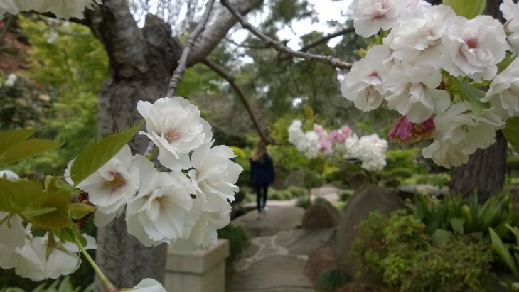 retki_adelaiden_japanilaiseen_puutarhaan