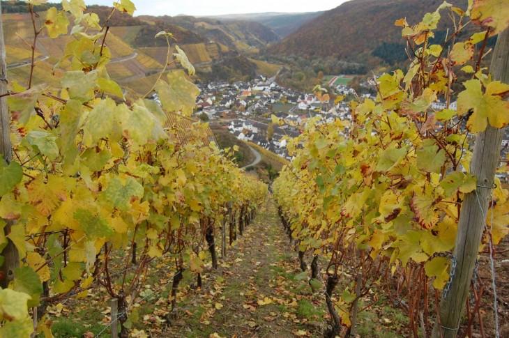viinirinne_syksy_dernau