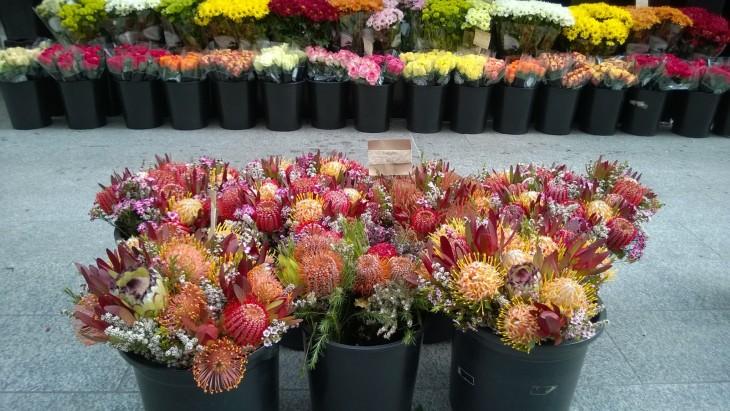 adelaide kukkakauppa