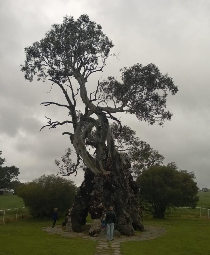 herbic family tree australia