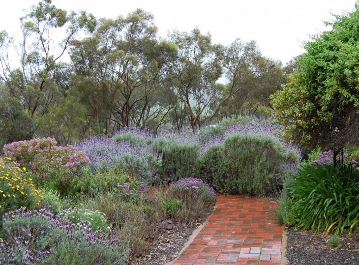 laventelitila tanunda australia