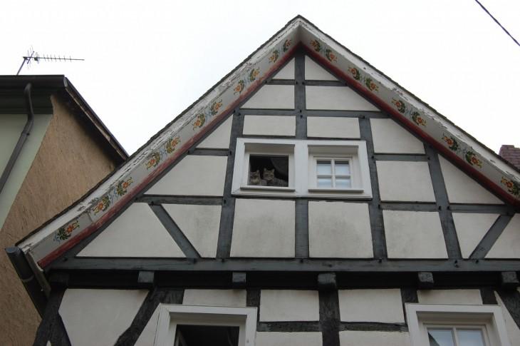 kissat_ikkunalla_ristikkotalo