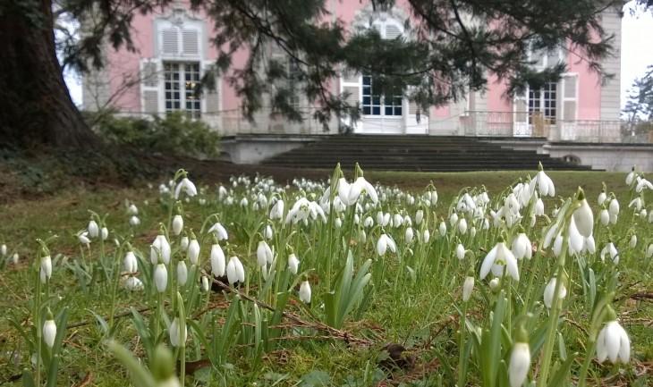 lumikellot_kukkivat_linnan_puutarhassa