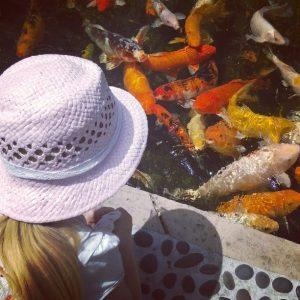 Miami beach botanical garden Florida Kultakalojen ruokkiminen oli hauskaa puuhaa!hellip