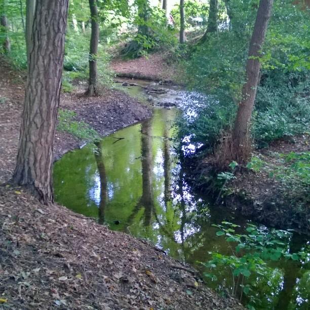 Kvelyll metsss Harmaanakin pivn lyt kauneutta wald mets forest saksahellip