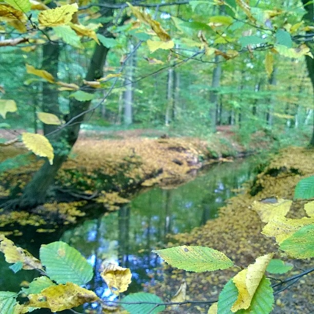 Metsss Kln cologne syksy herbst wald october Ruska mets visitkoelnhellip