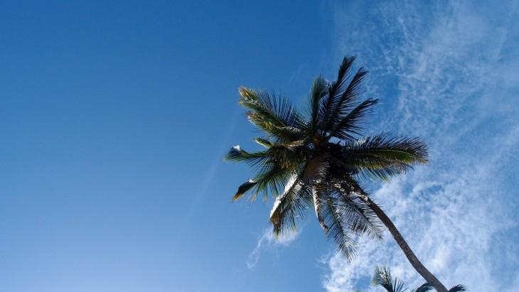 Palmu Costa Rica
