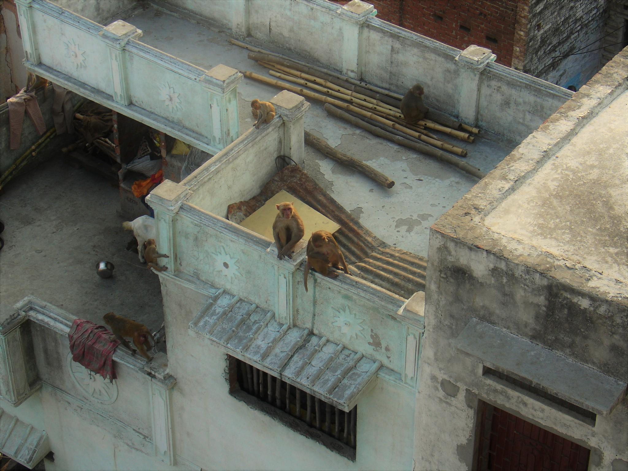 makaki Varanasi