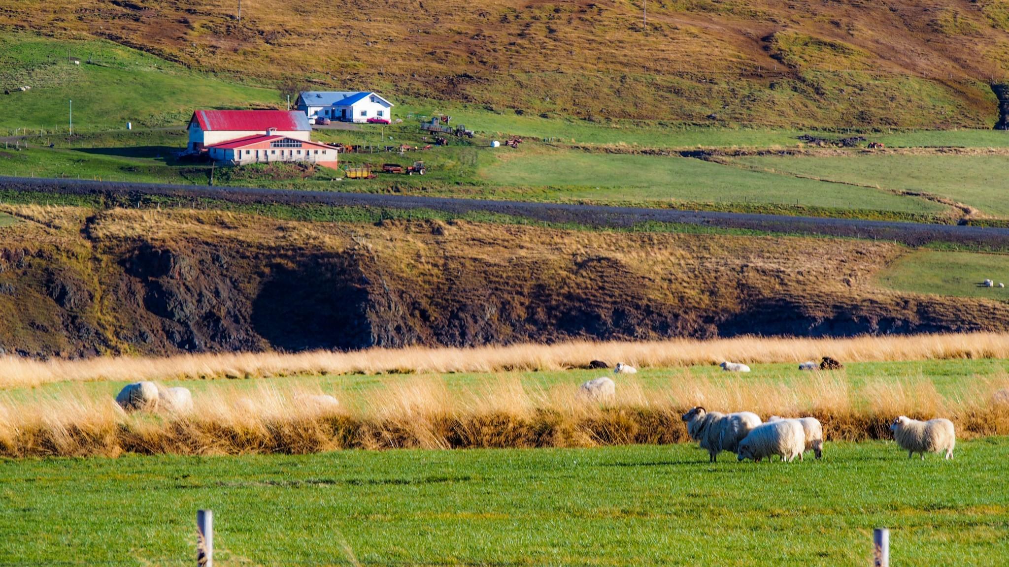 Islannin ympäri autolla
