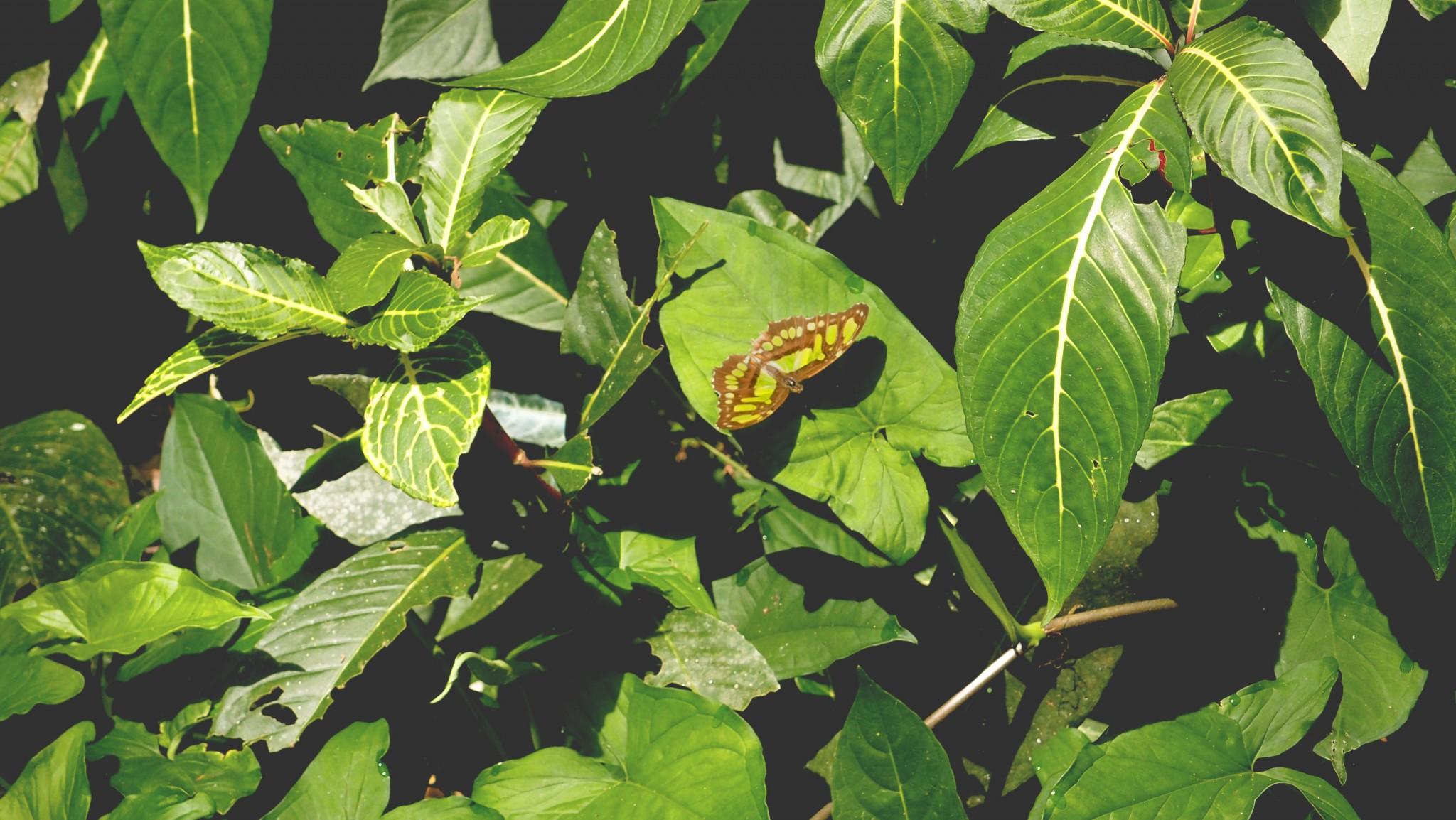 Costa Rica La kukula lodge