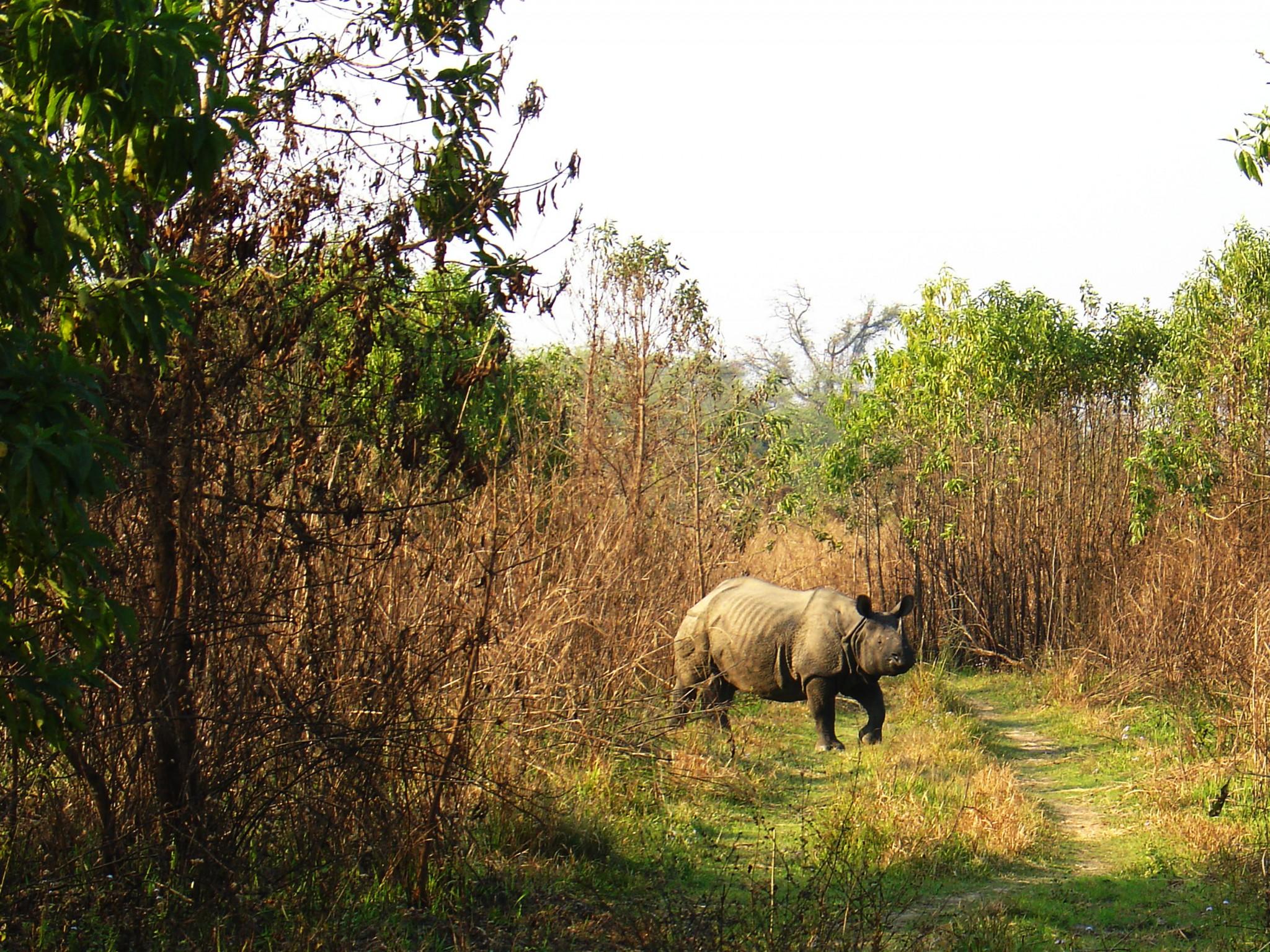 sarvikuono Nepal Chitwan kansallispuisto