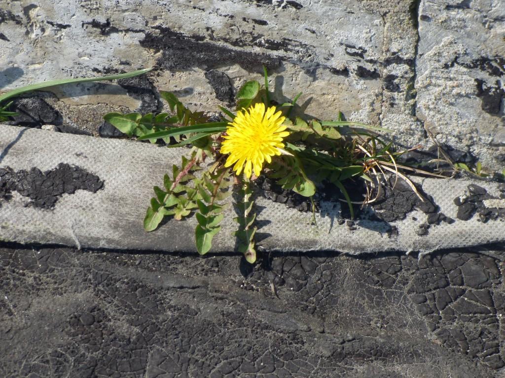 tallinna 22 kukka