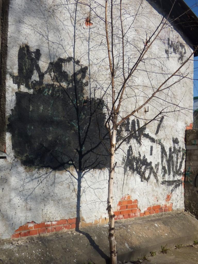 tallinna 29 puu