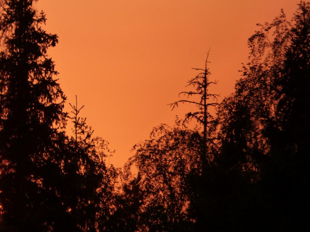 soukka oranssi