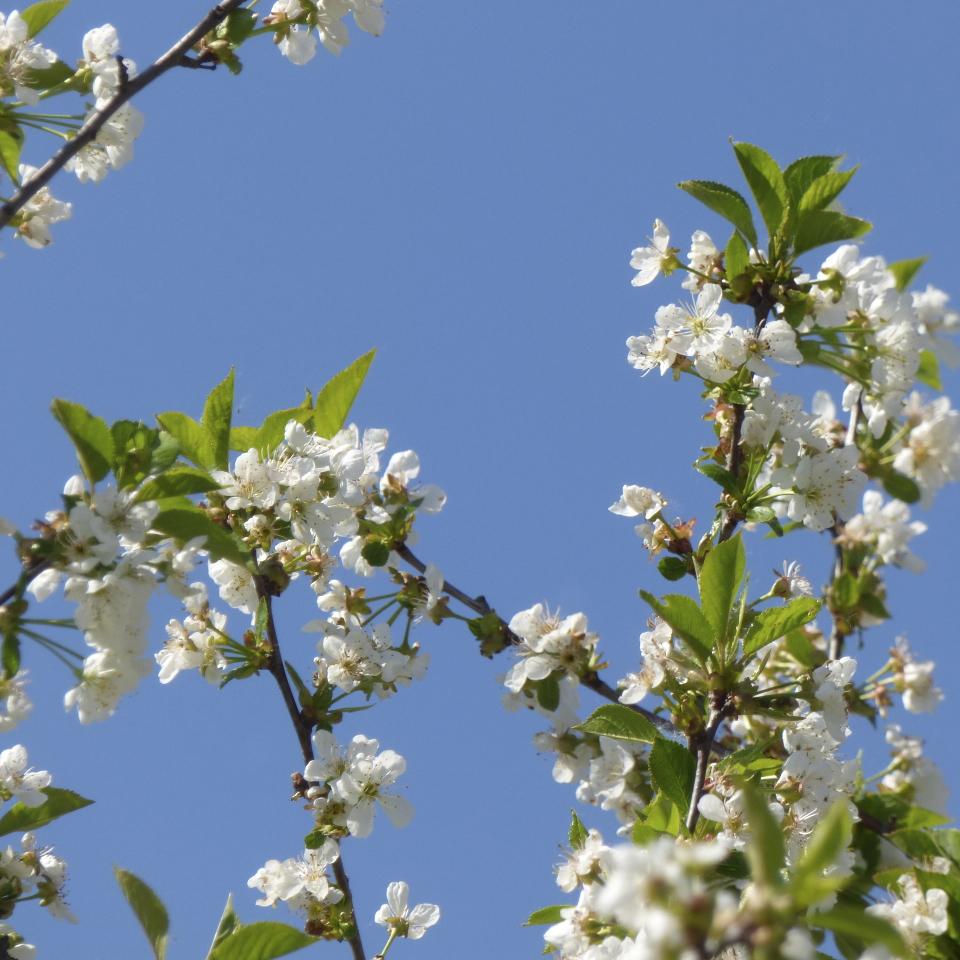instaflower