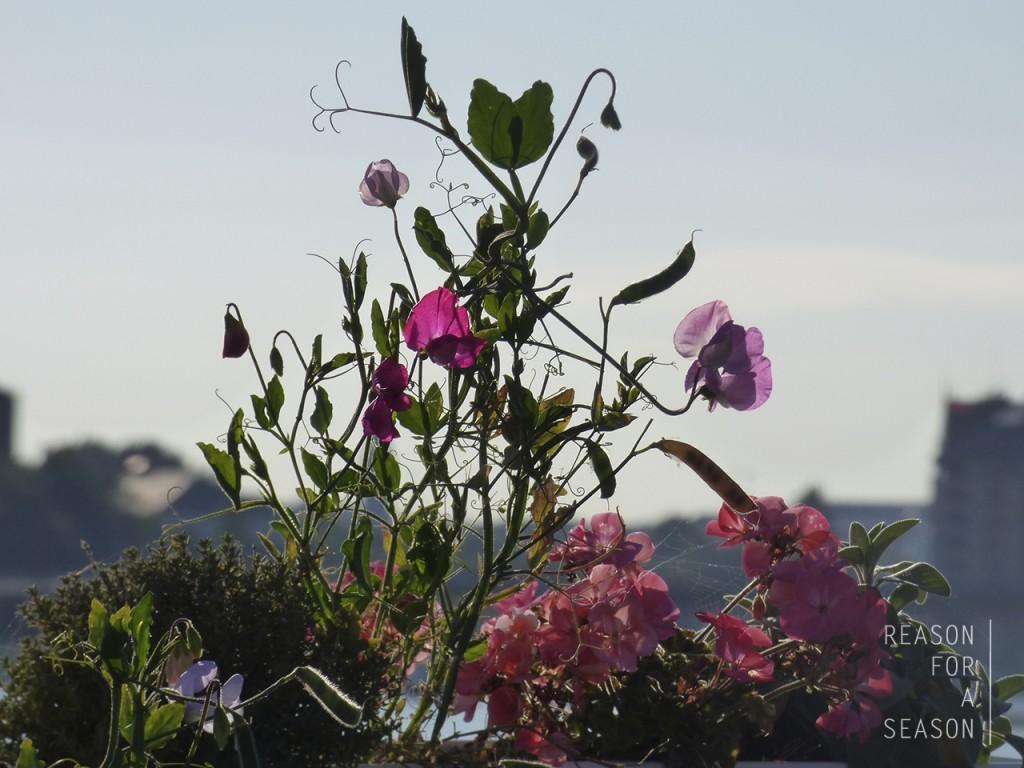 kukkaistustus